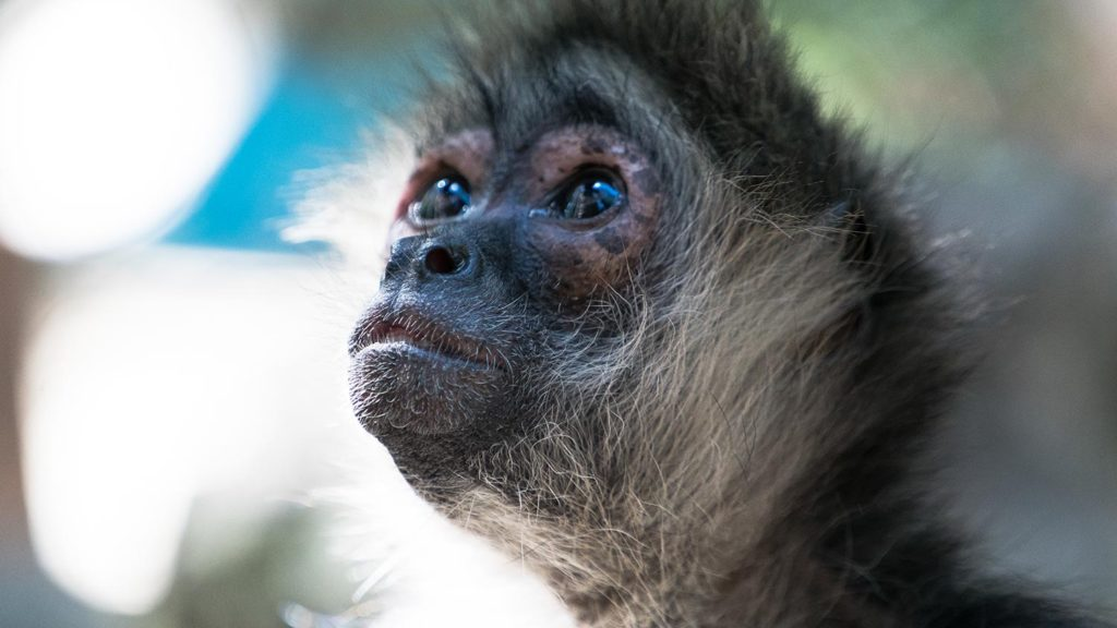 Expert guides will teach you all about animals ❤️🐵